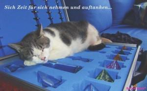 Katze-Koffer